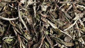 Dried, raw white tea leaves rotating background close up view flat lay from above stock footage