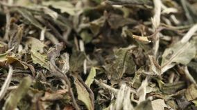 Dried, raw white tea leaves rotating over white background close up view stock video footage