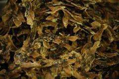 Dried razor clams Stock Photos