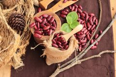 Dried red beans for cooking. Stock Images