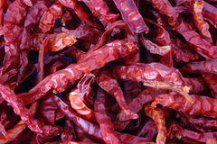Dried Red Chili Royalty Free Stock Photo
