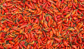 dried red chili Stock Image