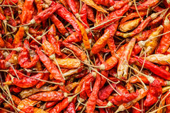 Dried red chili pepper Royalty Free Stock Image