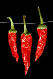 Dried red chili peppers Stock Photos