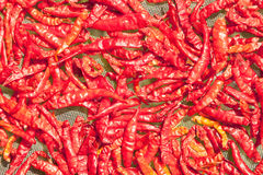 Dried red chili peppers drying on the sun,Of women's groups in P Royalty Free Stock Photo