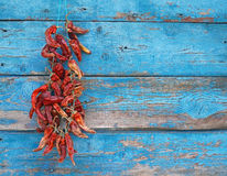 Dried red chili peppers on a wall Stock Images