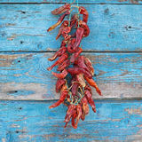 Dried red chili peppers on a wall Royalty Free Stock Photography