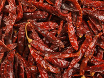 Dried red chilies Stock Images