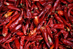 Free Dried Red Chilies Royalty Free Stock Image - 4929046