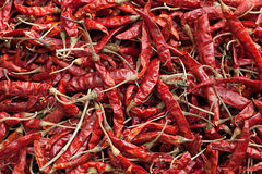 Dried red chilli Stock Photos