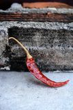 Dried red chilli. Royalty Free Stock Photos