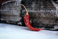 Dried red chilli. Stock Photo