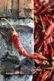 Dried red chilli. Royalty Free Stock Photo