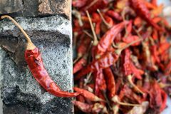 Dried red chilli. Stock Image