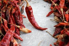 Dried red chilli. Stock Photography