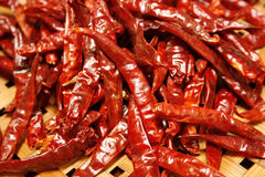 Dried red chilli Stock Image