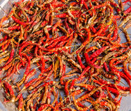 Dried red chilli, food ingredient Stock Photo