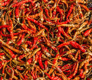 Dried red chilli, food ingredient Stock Image