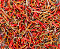 Dried red chilli, food ingredient Stock Images