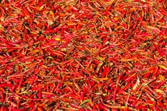 Dried Red Chilli Stock Photography