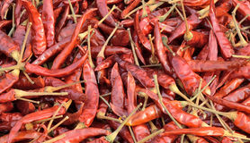 Dried red chilli Royalty Free Stock Images