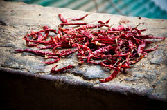 Dried Red Chilli Peppers. Red chilli peppers drying on a stone wall Royalty Free Stock Image