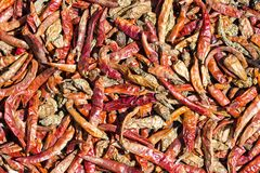 Dried red chilli peppers background in Kathmandu, Nepal Royalty Free Stock Photography