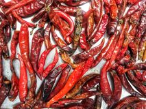 Dried red chilli Royalty Free Stock Photo