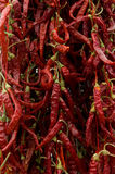 Dried red chillies Stock Image