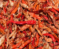 Dried red chillies as a textured food background. Stock Image
