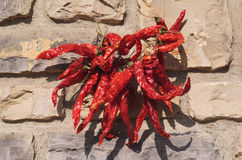Dried red chillies. Stock Photos