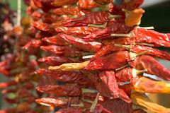 Dried Red Chillis. Piles of dried red chillis Stock Photos