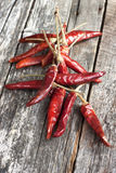 Dried red chilly pepper Stock Image