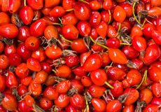 Dried red hips Royalty Free Stock Image