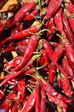 Dried red hot chili pepper Royalty Free Stock Photo