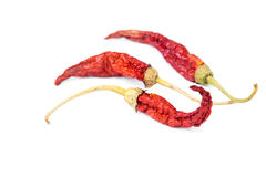 Dried red hot chili pepper Stock Photography