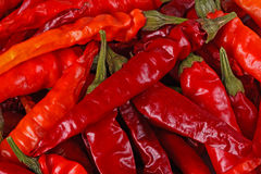 Dried red hot chili peppers fill the frame Stock Photography