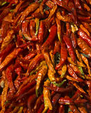 Dried red hot chilly pepper Stock Photo