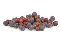 Dried red juniper and high juniper berries Royalty Free Stock Image