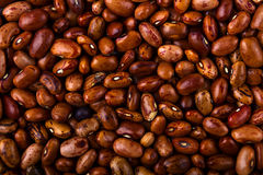 Dried Red Kidney Beans Royalty Free Stock Photos