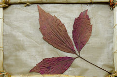 Dried red leaves in a vintage frame Stock Photos