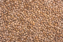 Dried Red Lentils Royalty Free Stock Photo