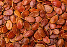 Dried red melon seed Royalty Free Stock Photos