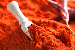 Dried red paprika Royalty Free Stock Photo