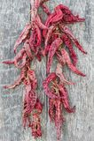 Dried red peppers on a wooden table. Dried red paprika on a old wood table Royalty Free Stock Photography