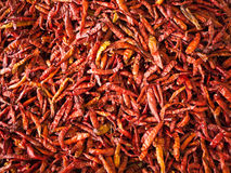 Dried red pepper. Stock Photography