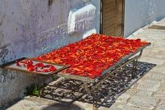 Bernalda Italy Dried red pepper Italian stlye Stock Photos