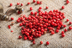 Dried red pepper spice. On burlap Stock Images