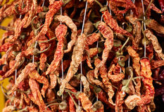 Dried red peppers Royalty Free Stock Photography