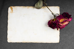 Dried red rose and blank photograph Stock Photography